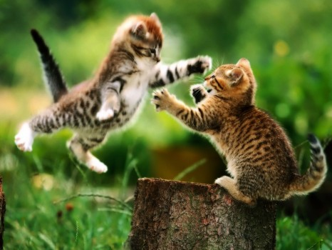 cute-kitties